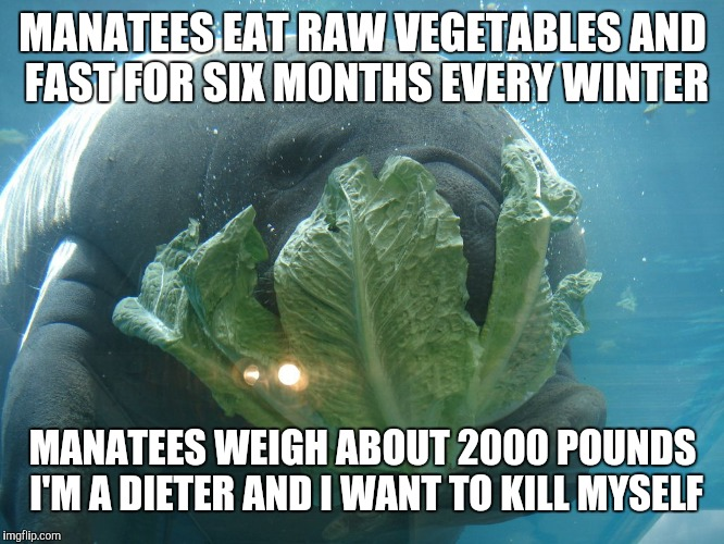 MANATEES EAT RAW VEGETABLES AND FAST FOR SIX MONTHS EVERY WINTER MANATEES WEIGH ABOUT 2000 POUNDS I'M A DIETER AND I WANT TO KILL MYSELF | image tagged in weight loss manatee,dieting,manatee,overlord manatee | made w/ Imgflip meme maker