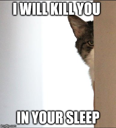 Kill You Cat | I WILL KILL YOU IN YOUR SLEEP | image tagged in memes,cats,kill you cat | made w/ Imgflip meme maker