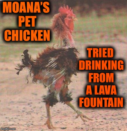 "Hawaii's verson on"" Yo Mama "" jokes...Moana's chicken is so dumb... 