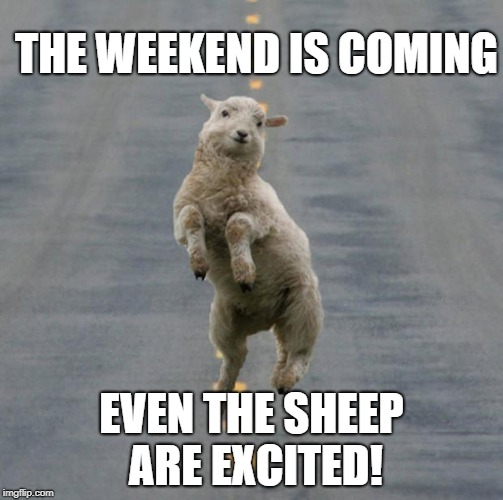 THE WEEKEND IS COMING EVEN THE SHEEP ARE EXCITED! | image tagged in friday | made w/ Imgflip meme maker