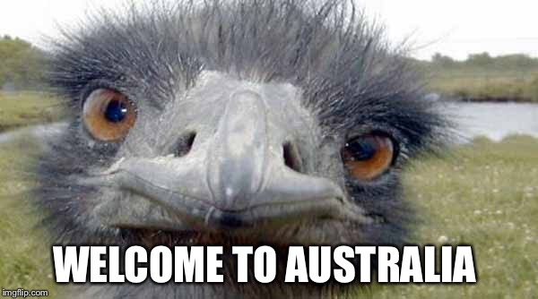 Emu Staring | WELCOME TO AUSTRALIA | image tagged in emu,australia | made w/ Imgflip meme maker