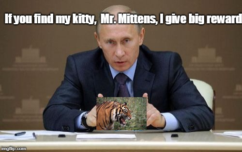 Russian State TV: Special Announcement | If you find my kitty,  Mr. Mittens, I give big reward | image tagged in memes,vladimir putin,kitty | made w/ Imgflip meme maker
