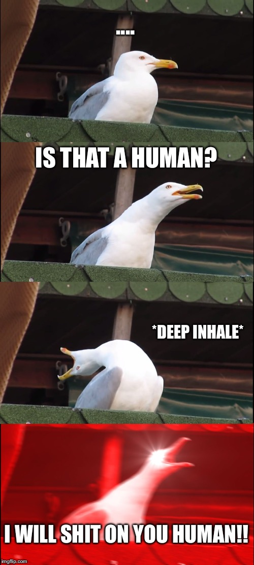 Seagulls | .... IS THAT A HUMAN? *DEEP INHALE* I WILL SHIT ON YOU HUMAN!! | image tagged in memes,inhaling seagull | made w/ Imgflip meme maker