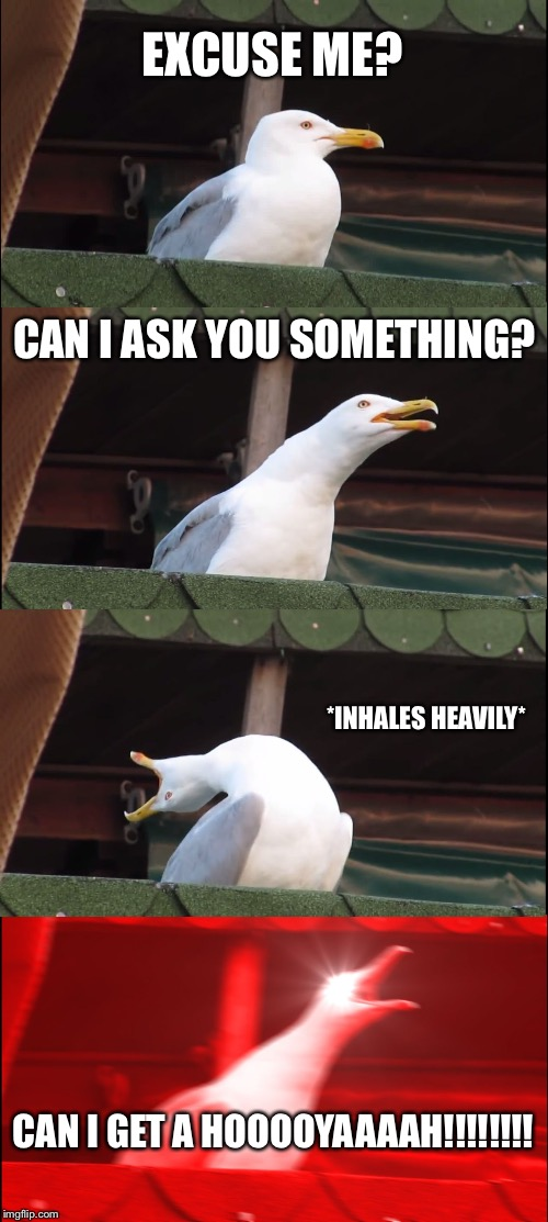 Inhaling Seagull Meme | EXCUSE ME? CAN I ASK YOU SOMETHING? *INHALES HEAVILY* CAN I GET A HOOOOYAAAAH!!!!!!!! | image tagged in memes,inhaling seagull | made w/ Imgflip meme maker