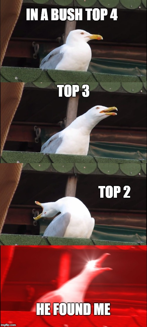 Inhaling Seagull Meme |  IN A BUSH TOP 4; TOP 3; TOP 2; HE FOUND ME | image tagged in memes,inhaling seagull | made w/ Imgflip meme maker