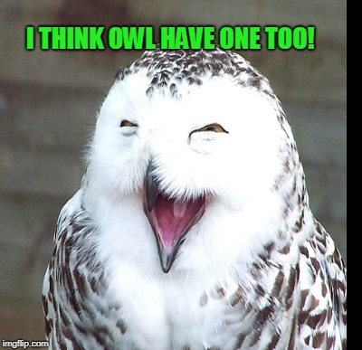 I THINK OWL HAVE ONE TOO! | made w/ Imgflip meme maker
