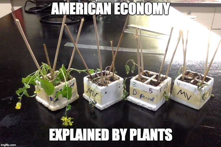ExPLANTation | AMERICAN ECONOMY EXPLAINED BY PLANTS | image tagged in america,economics | made w/ Imgflip meme maker