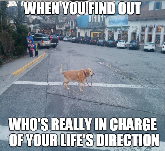 Doggone Straight | WHEN YOU FIND OUT WHO'S REALLY IN CHARGE OF YOUR LIFE'S DIRECTION | image tagged in life,mind control | made w/ Imgflip meme maker