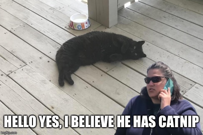 I believe he has catnip |  HELLO YES, I BELIEVE HE HAS CATNIP | image tagged in bbqbecky,cats | made w/ Imgflip meme maker