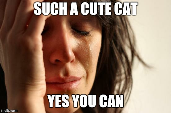 First World Problems Meme | SUCH A CUTE CAT YES YOU CAN | image tagged in memes,first world problems | made w/ Imgflip meme maker