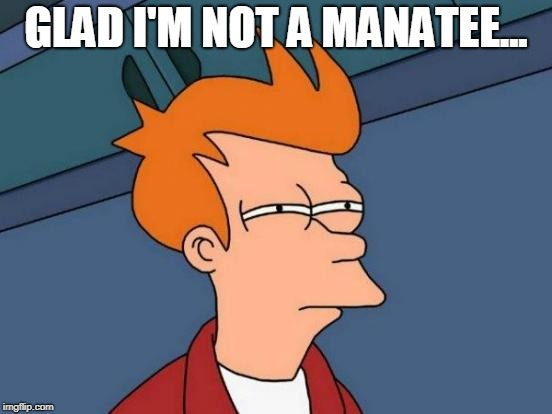 Futurama Fry Meme | GLAD I'M NOT A MANATEE... | image tagged in memes,futurama fry | made w/ Imgflip meme maker