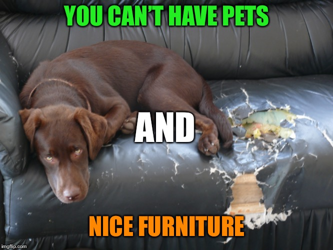 YOU CAN'T HAVE PETS NICE FURNITURE AND | made w/ Imgflip meme maker