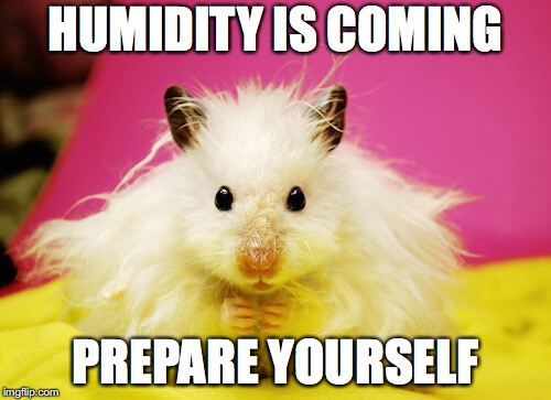 HUMIDITY IS COMING PREPARE YOURSELF | image tagged in humidity is coming | made w/ Imgflip meme maker