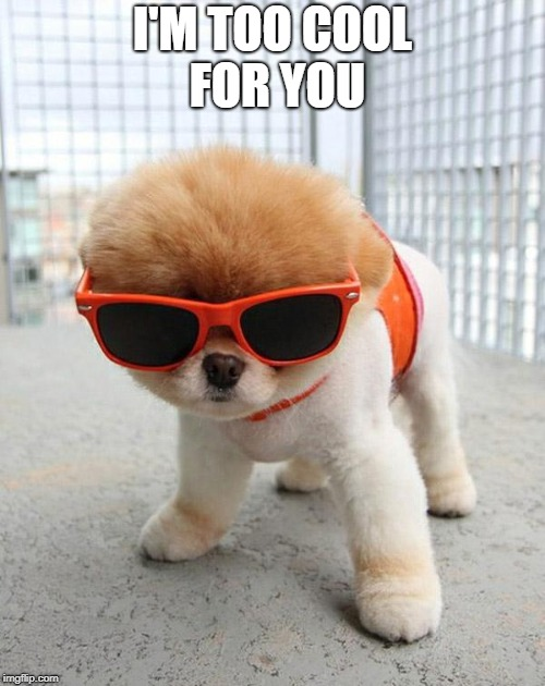 Cute Puppies | I'M TOO COOL FOR YOU | image tagged in cute puppies | made w/ Imgflip meme maker