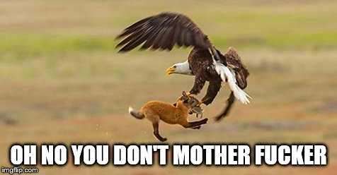 OH NO YOU DON'T MOTHER F**KER | image tagged in funny | made w/ Imgflip meme maker