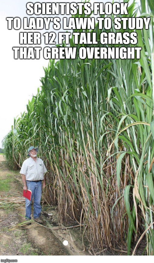 SCIENTISTS FLOCK TO LADY'S LAWN TO STUDY HER 12 FT TALL GRASS THAT GREW OVERNIGHT | made w/ Imgflip meme maker