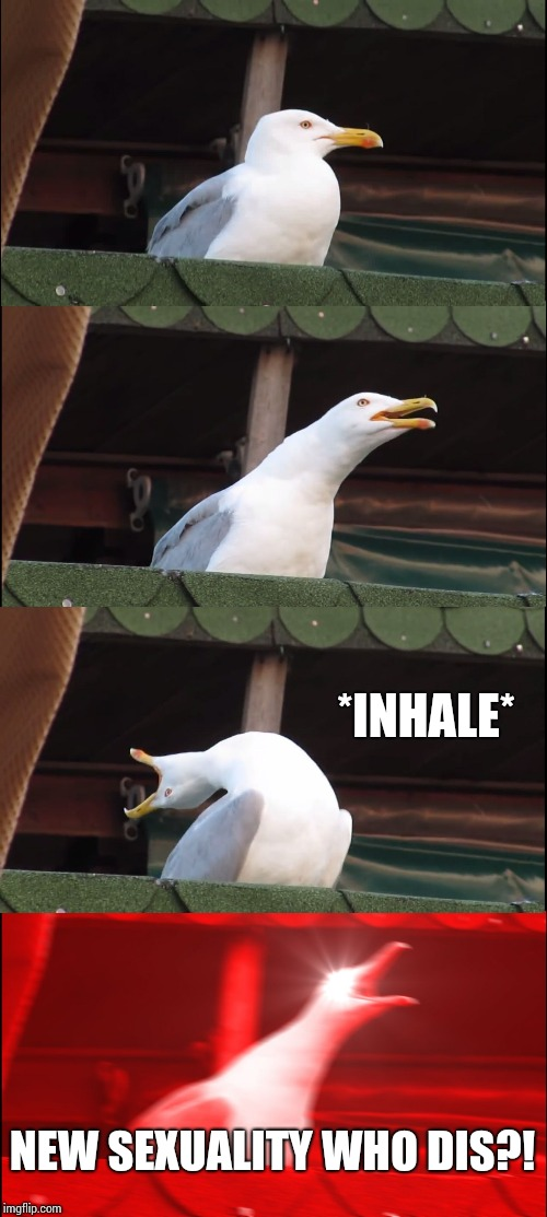 Inhaling Seagull Meme | *INHALE* NEW SEXUALITY WHO DIS?! | image tagged in memes,inhaling seagull | made w/ Imgflip meme maker