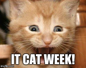 Excited Cat | IT CAT WEEK! | image tagged in memes,excited cat | made w/ Imgflip meme maker