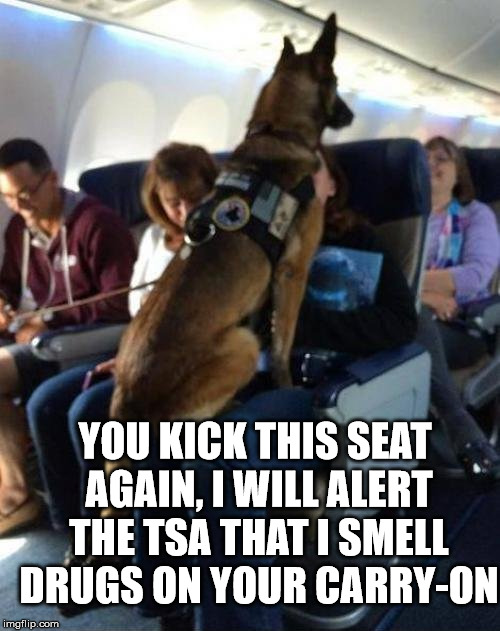 Alert dog | YOU KICK THIS SEAT AGAIN, I WILL ALERT THE TSA THAT I SMELL DRUGS ON YOUR CARRY-ON | image tagged in memes,police dog,tsa,security,joke,humor | made w/ Imgflip meme maker