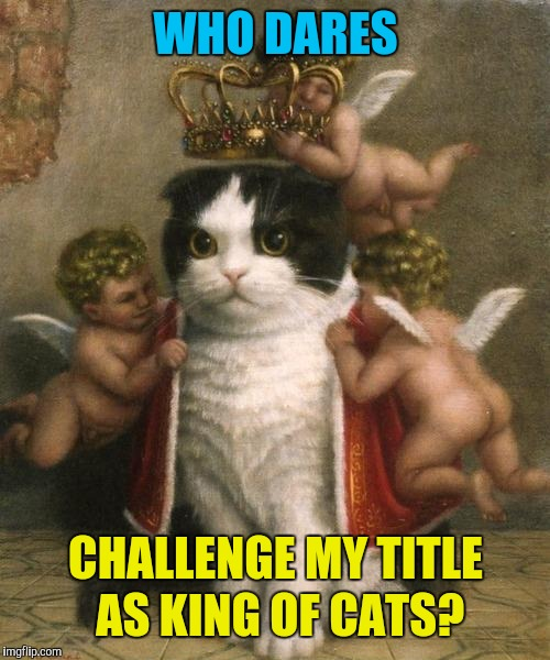 WHO DARES CHALLENGE MY TITLE AS KING OF CATS? | made w/ Imgflip meme maker