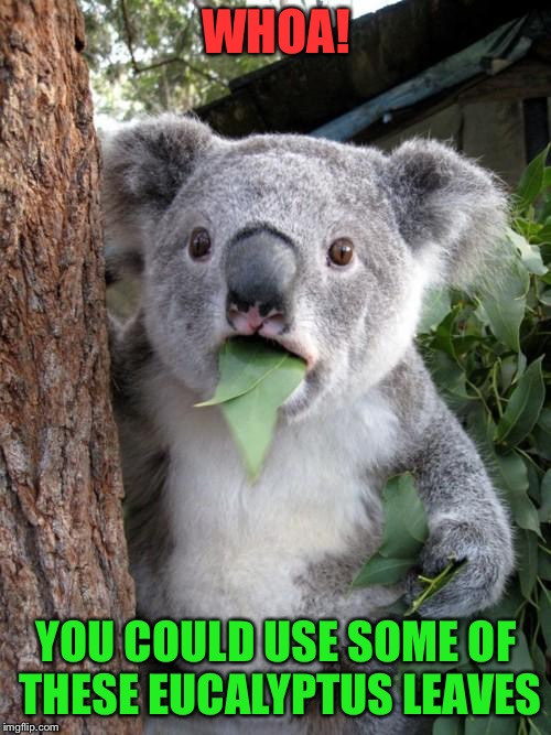 WHOA! YOU COULD USE SOME OF THESE EUCALYPTUS LEAVES | made w/ Imgflip meme maker