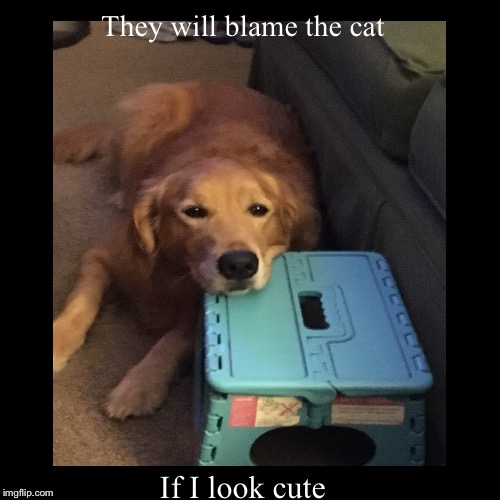 If I look cute | They will blame the cat | image tagged in funny,demotivationals | made w/ Imgflip demotivational maker