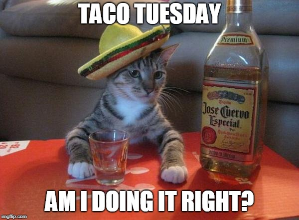 alcohol cat | TACO TUESDAY AM I DOING IT RIGHT? | image tagged in alcohol cat | made w/ Imgflip meme maker