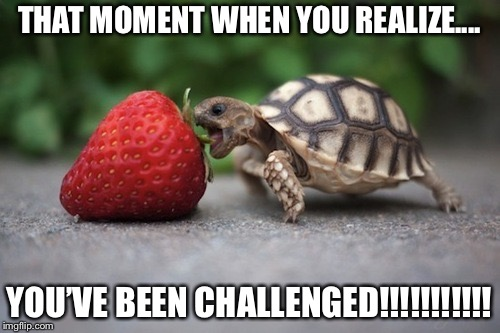 Turtle with Strawberry | THAT MOMENT WHEN YOU REALIZE.... YOU'VE BEEN CHALLENGED!!!!!!!!!!! | image tagged in turtle with strawberry | made w/ Imgflip meme maker