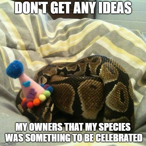 DON'T GET ANY IDEAS MY OWNERS THAT MY SPECIES WAS SOMETHING TO BE CELEBRATED | image tagged in birthday snake | made w/ Imgflip meme maker