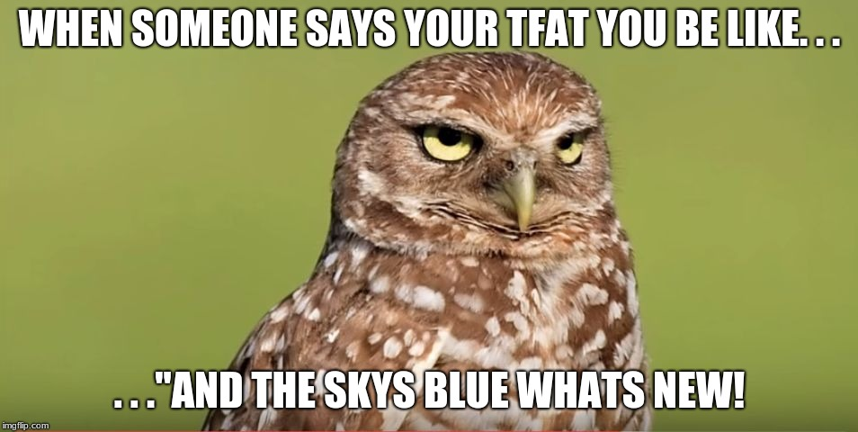 Death Stare Owl | WHEN SOMEONE SAYS YOUR TFAT YOU BE LIKE. . . . . .''AND THE SKYS BLUE WHATS NEW! | image tagged in death stare owl | made w/ Imgflip meme maker