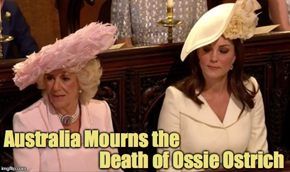 Camilla's Hat - Australia Mourns the Death of Ossie Ostrich  | Australia Mourns the Death of Ossie Ostrich | image tagged in camilla's hat - australia mourns the death of ossie ostrich,royal wedding,royal family,duchess of cornwall,duchess of cambridge, | made w/ Imgflip meme maker