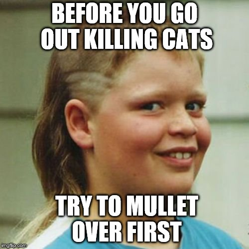 Think before you do people!! | BEFORE YOU GO OUT KILLING CATS TRY TO MULLET OVER FIRST | image tagged in redneck,naughty,mullet,neo,imgflip,funny memes | made w/ Imgflip meme maker