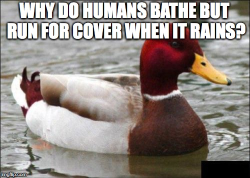 WHY DO HUMANS BATHE BUT RUN FOR COVER WHEN IT RAINS? | made w/ Imgflip meme maker