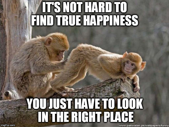 monkey butt | IT'S NOT HARD TO FIND TRUE HAPPINESS YOU JUST HAVE TO LOOK IN THE RIGHT PLACE | image tagged in monkey butt | made w/ Imgflip meme maker