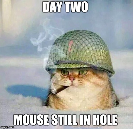 War Cat | DAY TWO MOUSE STILL IN HOLE | image tagged in war cat | made w/ Imgflip meme maker