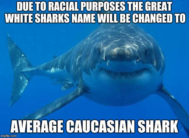 Straight White Shark | DUE TO RACIAL PURPOSES THE GREAT WHITE SHARKS NAME WILL BE CHANGED TO AVERAGE CAUCASIAN SHARK | image tagged in straight white shark | made w/ Imgflip meme maker