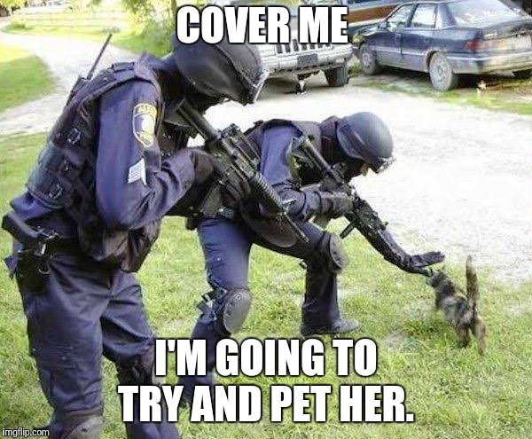 Cops Arrest Cat | COVER ME I'M GOING TO TRY AND PET HER. | image tagged in cops arrest cat | made w/ Imgflip meme maker