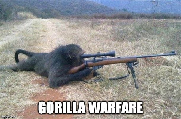 Meanwhile in Africa | GORILLA WARFARE | image tagged in sniper monkey | made w/ Imgflip meme maker