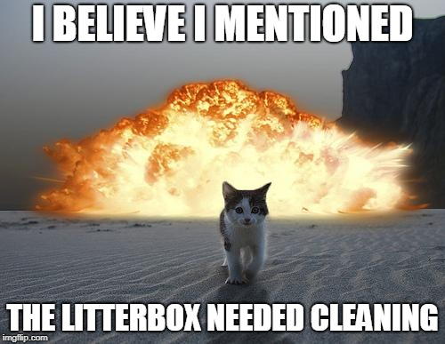 cat explosion | I BELIEVE I MENTIONED THE LITTERBOX NEEDED CLEANING | image tagged in cat explosion | made w/ Imgflip meme maker