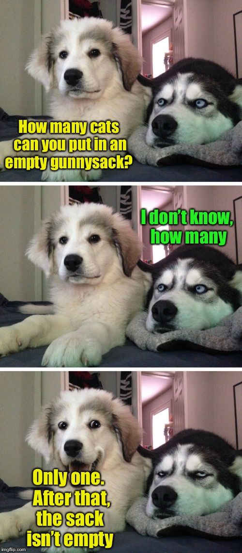 Bad pun dogs | How many cats can you put in an empty gunnysack? Only one.  After that, the sack isn't empty I don't know, how many | image tagged in bad pun dogs | made w/ Imgflip meme maker