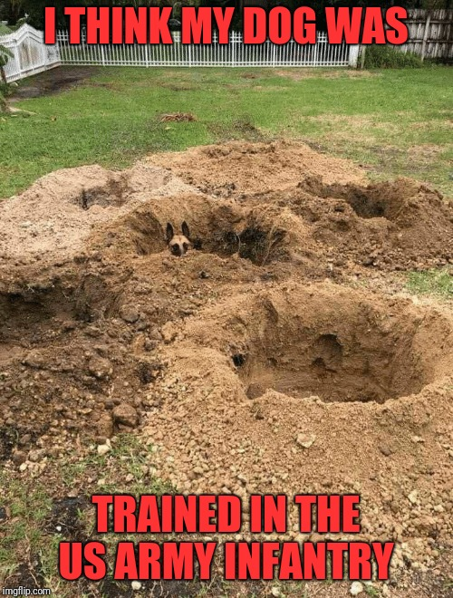 Born again hard | I THINK MY DOG WAS TRAINED IN THE US ARMY INFANTRY | image tagged in memes,funny,dank,us army,infantry | made w/ Imgflip meme maker