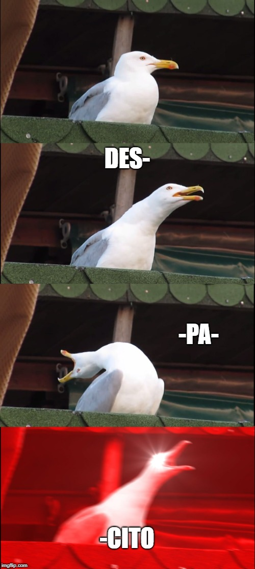Inhaling Seagull Meme | DES- -PA- -CITO | image tagged in memes,inhaling seagull | made w/ Imgflip meme maker