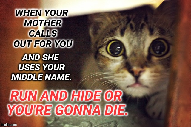 Don't Mess With the Momma! | WHEN YOUR MOTHER CALLS OUT FOR YOU AND SHE USES YOUR MIDDLE NAME. RUN AND HIDE OR YOU'RE GONNA DIE. | image tagged in cat hiding scared,that moment when,fear me,frustrating mom,scary things,spanking | made w/ Imgflip meme maker