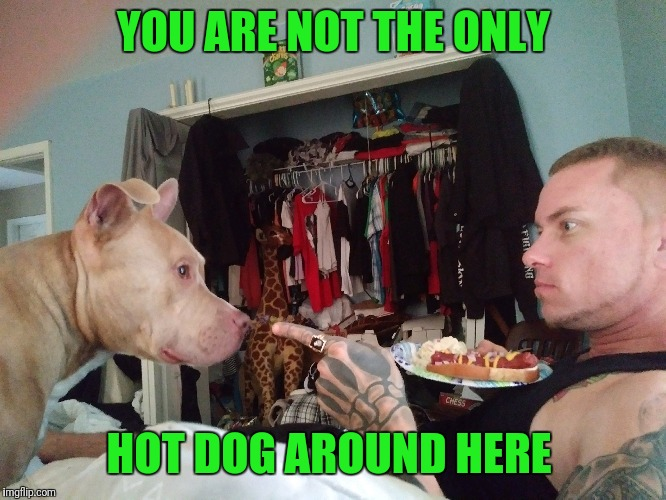 #hahaha | YOU ARE NOT THE ONLY HOT DOG AROUND HERE | image tagged in lol so funny | made w/ Imgflip meme maker