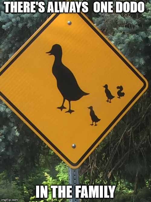 Check your other family members. If you can't figure out which one it is,it could be you | THERE'S ALWAYS  ONE DODO IN THE FAMILY | image tagged in ducks,dodo,warning sign | made w/ Imgflip meme maker