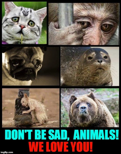 Aw.... Sad Animals | DON'T BE SAD,  ANIMALS! WE LOVE YOU! | image tagged in sad animals,vince vance,animals | made w/ Imgflip meme maker