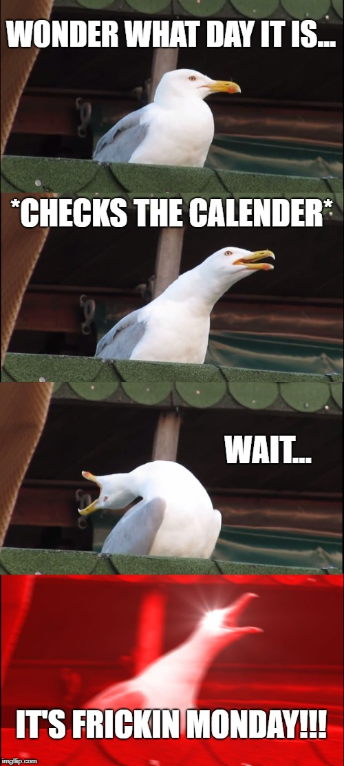 Inhaling Seagull Meme | WONDER WHAT DAY IT IS... *CHECKS THE CALENDER* WAIT... IT'S FRICKIN MONDAY!!! | image tagged in memes,inhaling seagull | made w/ Imgflip meme maker