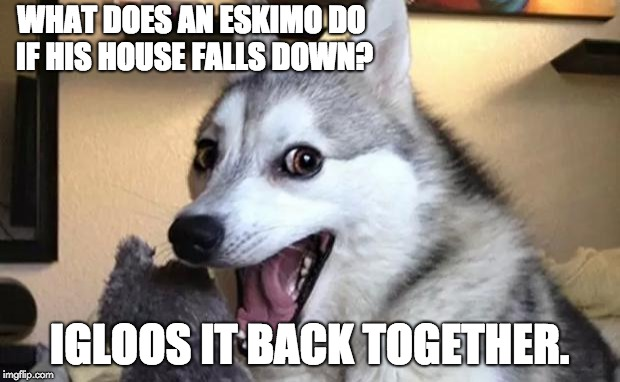 Pun dog - husky | WHAT DOES AN ESKIMO DO IF HIS HOUSE FALLS DOWN? IGLOOS IT BACK TOGETHER. | image tagged in pun dog - husky | made w/ Imgflip meme maker
