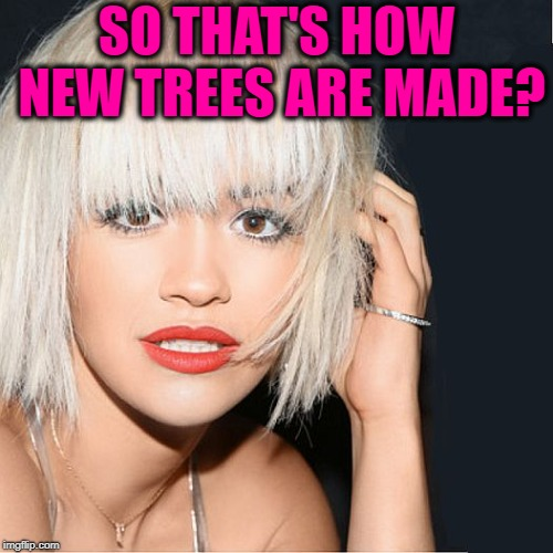 ditz | SO THAT'S HOW NEW TREES ARE MADE? | image tagged in ditz | made w/ Imgflip meme maker