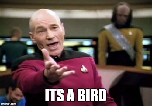 Picard Wtf Meme | ITS A BIRD | image tagged in memes,picard wtf | made w/ Imgflip meme maker